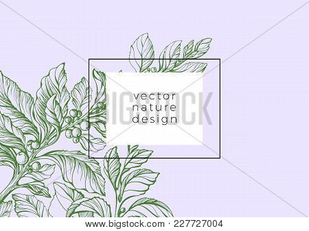 Vector Template Of Sketch Mate Branch Realistic Floral Illustration Flyer Of Green Card With Plant,