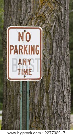 No Parking Any Time Sign By A Tree