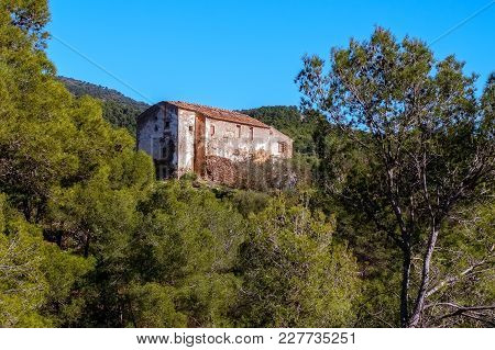 Abandoned House Ruins In The Forest, Panorama