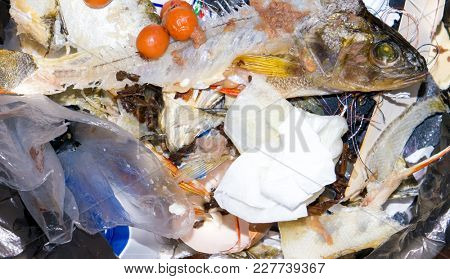 The food garbage texture and objects.