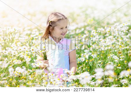 Little Girl Picking Flowers In Daisy Field