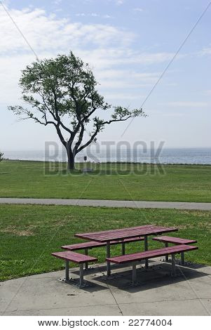 Picnic bench and tree