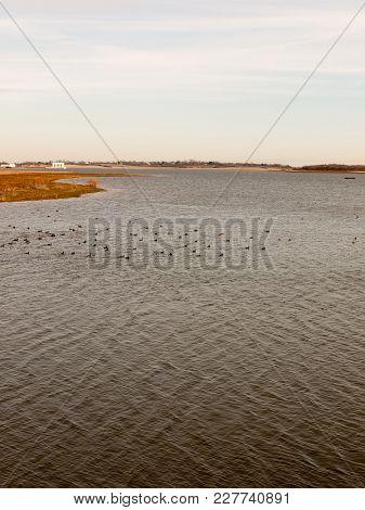 Many Birds In Ocean Beach Coast Nature Reserve Landscape Nature