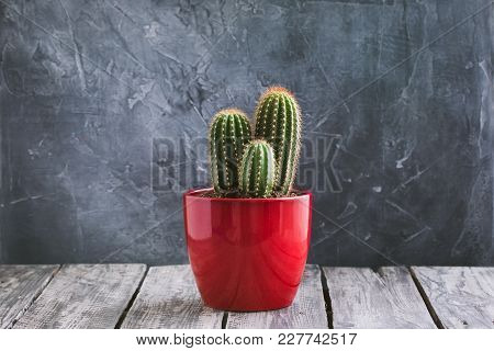 Green Cacti In The Red Pot On Rustic Wooden Background. Toned Vintage.
