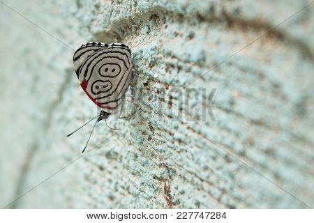 Mariposa Posada En Una Pared Con Textura