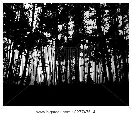 Woodland Eco Banner. Classic Black And White Tones.