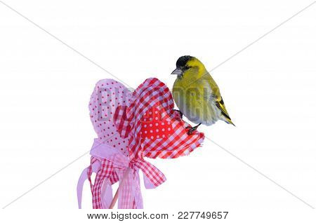 Small Eurasian Siskin Sits On A Heart For Valentine's Day (isolated On A White Background).