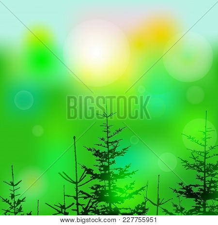 Eco Banner With Lights And Coniferous Trees. Can Be Used As Poster, Background, Backdrop, Label Of M