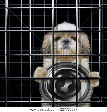 Hungry Dog Is Punishe In Cage Of Prison