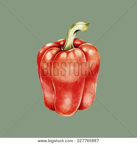 Illustration of red bell pepper