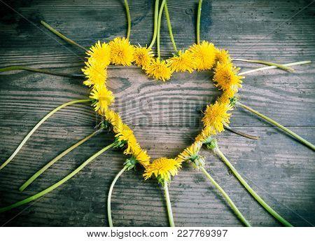 Arrangement Of Yellow Dandelions In The Heart Shape On Toned Dark Wooden Background