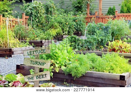 Lush and organic community vegetable, fruit and herb garden in summer with a funny garden quote on a wooden sign.
