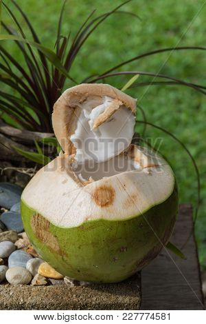 A Coconut Fruit Is Cut Opened And Ready For Drink.