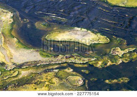 Flies In Abstract Geyser In Upper Geyser Basin, Yellowstone National Park