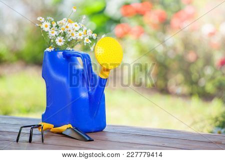 Flowers in a watering can on the background of a garden. Tools for gardening
