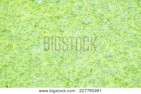Closeup Waste Water With Green Duckweed Textured Background