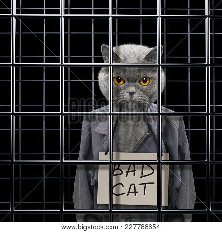 Bad Cat Is Punishe In Cage Of Prison
