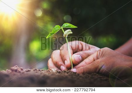 Concept Eco Hand Helping Planting Young Tree In Garden