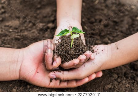 Concept Eco Hand Helping Holding Protection Young Plant