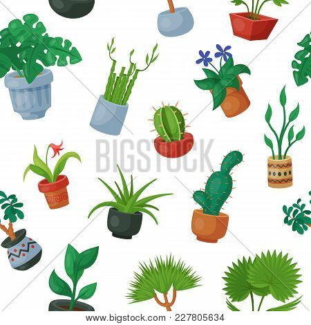 Home Plants In Flowerpots Vector Potted Flowery Houseplants For Interior Decoration With Botanic Col