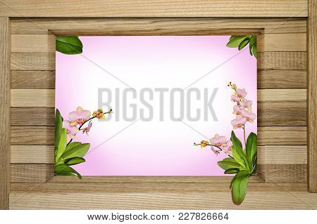 Square Frame For Congratulation From Orchid Flowers With Orchids Scattered Over The Surface Photo Or