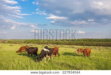 Livestock grazing during sunset in an idyllic valley, sweden poster