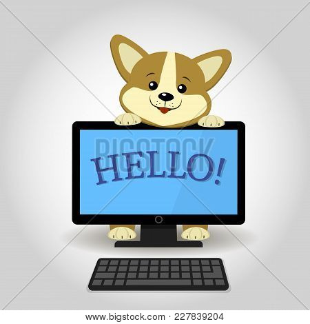 A Cute Corgi Dog Peeks Out From Behind A Black Computer With The Word Hello, In A Cartoon Style. Fla