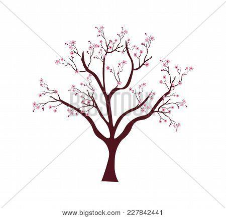 Sakura Tree With Twigs Cherry Blossoms. Pink Cherry Flower Blossom Branch, Peach Bloom, Sakura Branc