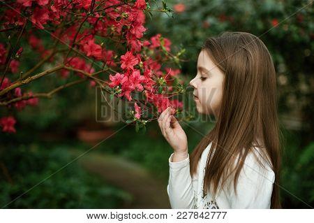 Girl Sniffing Flowers Of Azaleas
