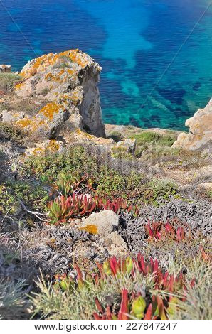 Succulent Plant On Steep Cliff Overhanging A Blue And Clear Sea