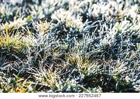 Frost Grass After A Cold Night In Winter