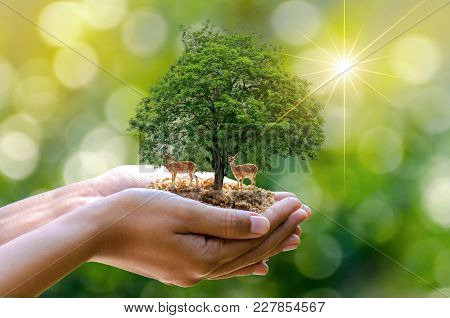 Tree In The Hands Of Trees Growing Seedlings. Bokeh Green Background Female Hand Holding Tree On Nat