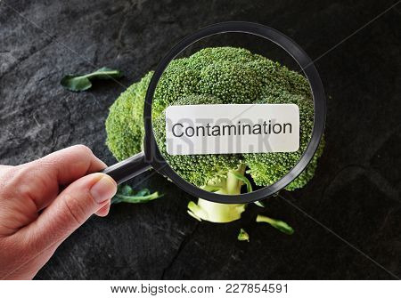 Contamination Label On Broccoli, Being Examined By A Person With Magnifying Glass