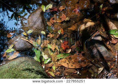 Leaves On The Waterway. Light And Shadow On Water Surface.