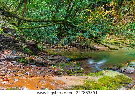 Thicket Of The Gorge And The Mountain River Bezumenka In Autumn Day, Sochi, Russia