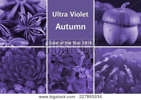Collage Of Photos On The Autumn Theme In Ultra Violet