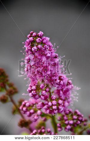 Interesting Beautiful Floret Flower Of A Bush In The Warm Autumn Sun