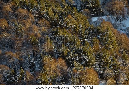 Fine-textured Background Of An Autumn Forest Pattern In Yellow Tones With Snow Elements View From Ab