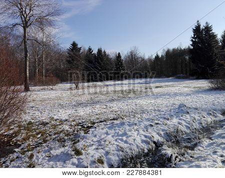 Idyllic Winter Landscape;  Bald Deciduous Trees, Conifers; Blue Sky