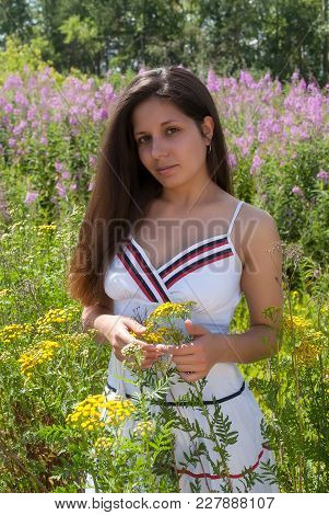 Young Beautiful Woman In Sundress Relaxes On Fireweed Meadow