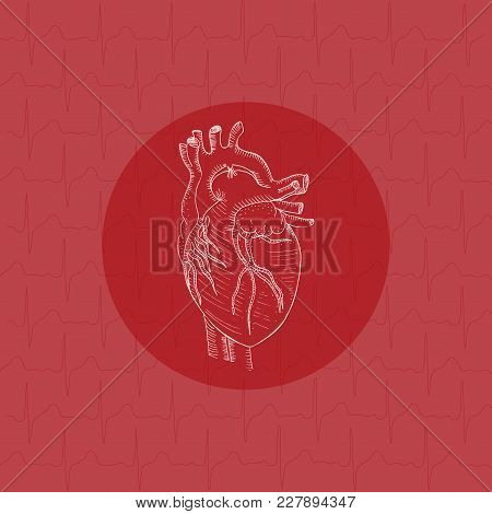 White Human Heart On Round Substrate Placed On The Color Background With Cardiogram Texture. Human A