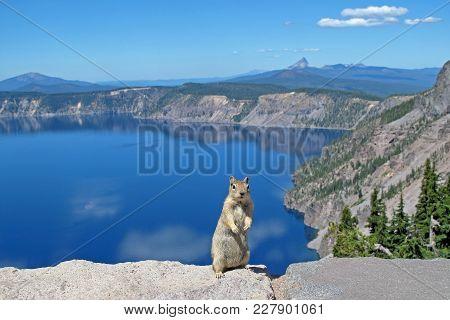 Golden Mantled Ground Squirrel Or Chipmunk Posing In Crater Lake National Park, Oregon, Usa