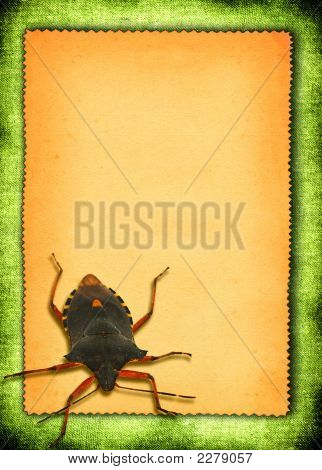 Paper With Bed-Bug