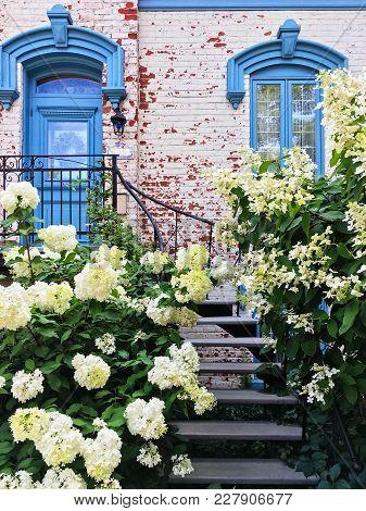 White Gardenias Decorating Facade Of A Picturesque Townhouse In Montreal. Quebec, Canada.