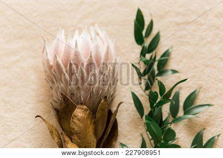 Bunch Of Protea Aristata