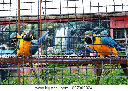 Several Parrots Macaw Sit On A Pole And Attentively Look At The Foreground