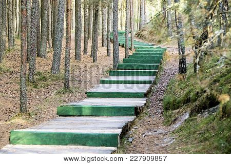 Long Green Wooden Ladder In The Wood As The Road In An Environment Of Pines