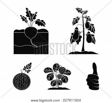 Radish, Strawberry, Watermelon, Eggplant.plant Set Collection Icons In Black Style Vector Symbol Sto
