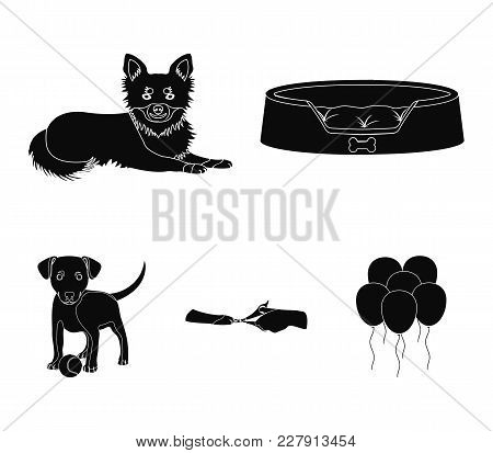 Lounger For A Pet, Clipping Of Claws In A Vet Clinic, Lying Dog, Puppy With A Ball. Vet Clinic And P