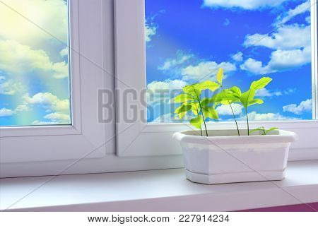 Young Plants Of Oaks On Window-sill Of Balcony And View To Cloudy Sky. Young Trees Are Ready To Plan